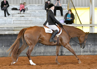 VS Heartbeat ridden by Lyndall Dauth in Amatuer Hunt Seat Equitation