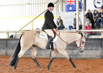 YB Ima Radical Tradition shown by Phillip Henderson in 2year Old Hunter Under Saddle