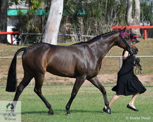 Carman Nowak presented her Riding Pony, Rivendell Illusion to be declared Champion Led Showhorse and Supreme Led Exhibit of the 2019 Darwin Royal Show.