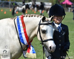 Ashleigh Overall exhibited Glynyarra Park Liberto to take out the Welsh Pony championship.