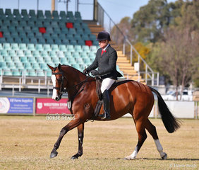 """Sharyn McKell's """"Jarendan Just Saying"""" placed 3rd in the Small Show Hunter Hack event."""