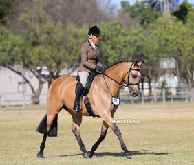 "Sallie Slater and ""Taltarni"" working out in the Small Show Hunter Hack event, in which they placed 5th."