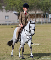 """""""Tooravale Mayfair"""" working out in the Small Show Hunter Pony event, exhibited by Tegan Maluta."""