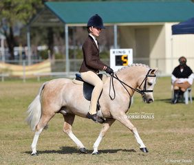 """Working out in the Small Show Hunter Pony event is Emma Meek's """"Shalida Park Cowboy""""."""