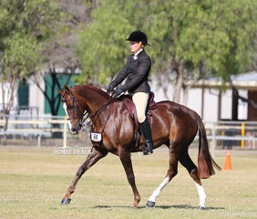 """Fourth placegetter in the Large Show Hunter Galloway event was Jana Poppe's exhibit """"Elmdale Huntington""""."""