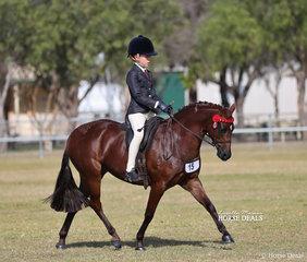 "Small Saddle Pony Runner Up Champion went to Georgia Cronin and ""Bamborough Royal Music""."