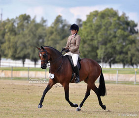 """""""Grandarah Country Road"""" exhibited by Michelle Haber and ridden by Emma Adams was the Champion Large Show Hunter Galloway."""