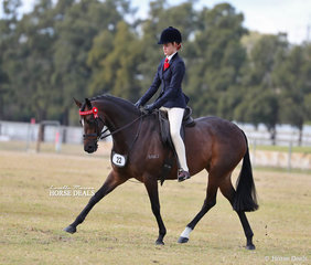 """Kyah Dema's """"Thorne Park Maybelline"""" was the Champion Small Saddle Galloway."""