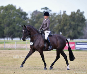 "Mel Clarke rode ""Tallyho Velocity"" to win Champion Small Show Hunter Hack."