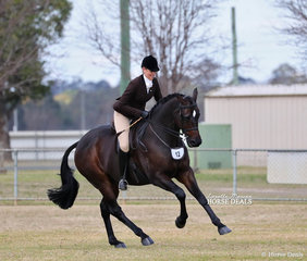 "Jess Castle and ""DP Kingdom"" won the Large Show Hunter Hack Championship."