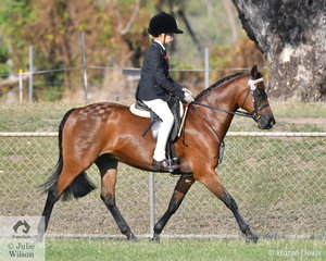 Charming young rider,  Rudi Walker Sangster had another wonderful day at the show. Rudi took out the Linda Hadden Memorial Junior Encouragement Award. Rudi also rode Tapu Daquiri to be declared Champion Pony Hack. Rudi won considerable prize money to add to his puppy fund.