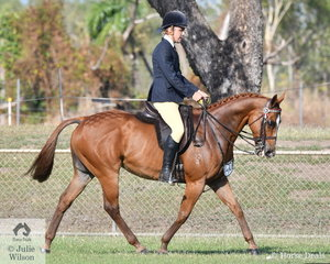 Daniel McBride rode Aesthic Warrior to second place in the Centerfold Memorial Trophy for the Best Thoroughbred Hack.