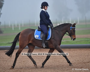"""Karen Cook rode """"Thalaba Ruby Dreaming"""" representing Gisborne ARC placing 2nd overall in the Level 2 on Saturday"""