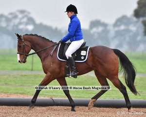 """Jessica Bates riding """"Prophecy"""" in the Level 4 representing Acheron Valley ARC"""