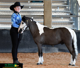 Recieving Reserve Grand Champion in the Best Presented Youth Age 10 - 13 was Edens Lord of the Dance and his exhibitor Katie Hircock at the Queensland AMHS States.