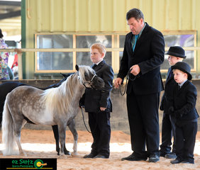 Three brothers Cooper, Taylor and youngest Nathan Ritter wait to enter the arena before their handler classes started on the Sunday morning at the AMHS QLD State Championships held at the Caboolture Showgrounds