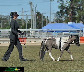 Showing the competition how its done in the State Champion Miniature Horse Long Reining was Glyndel Park PP Elise Fairie being exhibited by Nicki Klevering..