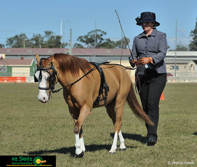 Jacki Brennan exhibited Kildaire Gold ...n... Wings beautifully through the obstacle course during the State Champion Little Horse Long Reining at the Queensland AMHS States to bring home the blue!