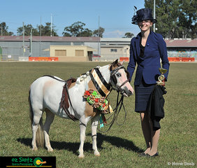 Winner of the Supreme Harness Exhibit at the Queensland AMHS States was Puzzle Pieces True Colours and exhibitor Tamara Sempf.