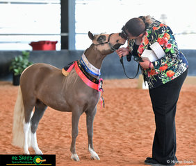 Kisses for Brave Heart Beauty and the Beat from trainer Rebecca Howe after winning the Grand Junior Gelding Miniature Horse Class.