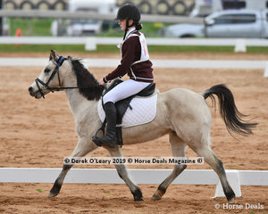 "Gracie Kearns in the Pony Club Grade 5 dressage riding ""Camberidge Park Beau"" making the long haul from Traralgon Pony Club"