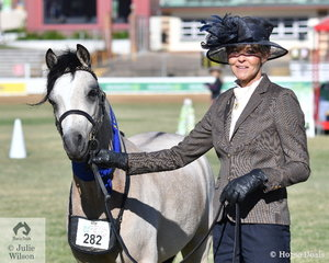 Keiley Anne Bell took out the Welsh Pony Gelding Any Age class with her own. 'Bellgarra Timto' (Brampton Prince of Thieves/Blue Gown Maybell).