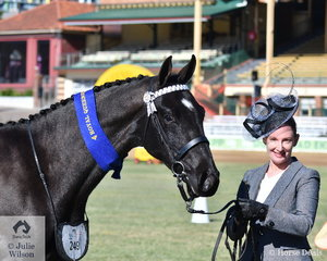 Helena Shanal is pictured with the Successful Stables', 'GLS Total Eclipse' (Totilas/Cooramin Furstenfire) that won the class for Warmblood Colt, Filly or Gelding 2 Years Old.