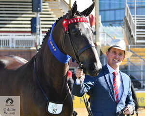 Mark Lilley is pictured with the Austin, Lilley and Baxter nomination, 'EBL Empress' (W Ellington imp USA/EBL Lush) that was declared Champion Mare and Supreme Led Warmblood Exhibit.