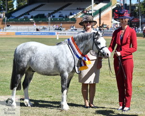 Katrina Christensen led, Kristi Gartner's gelding, 'Llangollen Porsche' (Llangollen Top Notch/Imperial Petite) to claim the Supreme Champion Welsh Mountain pony award. They are pictured with judge, Denise McPherson from New Zealand.