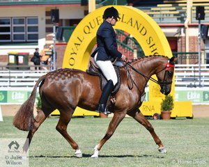 Paul Austin is pictured aboard yet another beautiful Dicavalli Warmblood. The Austin, Lilley, Whiteman and Burnett nomination, 'Dicavalli Royal Gabriella' (Rueben/Decoupage imp GER) is a half sister to the successful D. Royal Rory. Gabriella, just recently broken in was declared Reserve Champion Led Warmblood Mare.