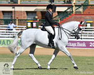 What a force the Dicavalli Stud is in breeding successful ridden horses. Lindsey Blanch rode her, 'Dicavalli Royal Gina' (Royal Gregor imp GER/Romantic) to win the class for Warmblood Under Saddle.