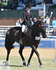 Ashley Cavanagh's, 'Lunar Star' (Laurie's As/Elite Galaxy) took second place in the class for Warmblood Under Saddle.