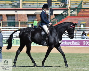 Belinda Gray's, 'OEH Showtime' (Showtime/Kookla Kookla) took third place in the strong class for Warmblood Under Saddle.