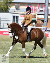 Tenille McConnell is pictured aboard  Donna McConnell's, 'Greenwood Blue Steel' (Awakino Blue Diamond/Arawa Rosina) that won the class for Welsh Cob/Cob Type Under Saddle.