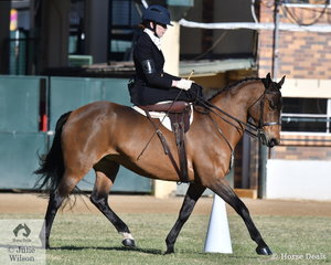 Elizabeth Jennings rode her, 'Equitana Gunner' to win the class for Formal Costume Side Saddle Turnout.