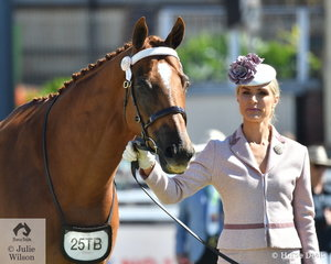 An elegant Jane Gollan is pictured with her, 'Heat Shield' (Northern Meteor/Tara's Spur) that took fourth place in the class for the QIRC Equine Welfare Programme  Thoroughbred Gelding Any Age that has raced or barrier trialed in the past 12 months.