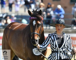 More glamour at the Ekka. Alexia Fraser is pictured with the Fraser Family's, 'Star of Columbia' (Monashee Mountain/Powderball) won the class for Thoroughbred Mare that has started in a race or barrier trial within the past 12 months.