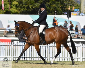 Kirsty Mason led her beautiful and athletic, .'Secret Surrounds' (Favelon/Marni) to claim the Champion Mare title and go on to be declared Supreme Champion Led Thoroughbred  and receive the Dan O'Connor Perpetual Trophy. Later in the day the mare with the most amazing, ground covering walk took third place in the class for Thoroughbred Mare Under Saddle.