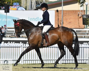 Madisen McGill's, 'Pop A Top' (Country Reel USA/Heroic Dance) took fifth place in the class for Thoroughbred Mare Under Saddle.