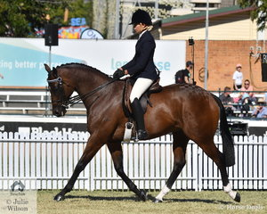 Janine Shepherdson rode her own and Lucy Thompson's Champion Led Gelding, 'Sigmund' (Casino Prince/Uncanny Lady)  to take fifth place in the class for Thoroughbred Gelding Under Saddle.