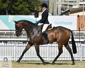Lisa McCann's Octagonal gelding, 'Ascot' out of Gala Ball took sixth place in the class for Thoroughbred Gelding Under Saddle.