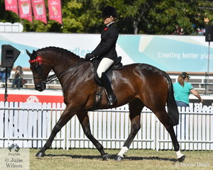 Amy Taylor rode her own, Paul Austin and Mark Lilley's nomination, 'Perzero' (Danzero/Thumpa) to take third place in the class for Thoroughbred Gelding Under Saddle.