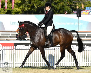 Kirsty Harper-Purcell rode her own and Charlotte Duddey's nomination, 'Mercurian' (Lonhro/De Largo Lass) to take seventh place in the class for Thoroughbred Gelding Under Saddle.
