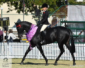 Tamicca Clottu won the class  for Thoroughbred Mare Under Saddle with her, 'You Angel You'  and went on to be declared Champion Thoroughbred Under Saddle.