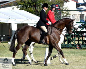Karen Shaw rode Corinne Collins' well performed, 'DP Polo' to win the class for Ladies/Gents Formal Turnout.