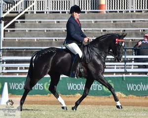 Always going forward, Paul Austin rode the Austin, Lilley and Monaghan nomination, 'Why Waltz Kid Rock' by Fiji R to take second place in the class for Novice Hack 15.2-16hh.