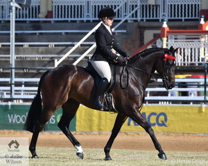 Kirsty Harper-Purcell rode the Harper-Purcell and De Jong nomination, 'Mercurian' to fourth place in the class for Novice Hack 16-16.2hh.