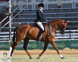 Renee Simpson from North Queensland rode her, 'Alkyra Conquest' to win the class for Novice Hack Over 16.2hh.