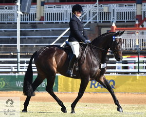 Kirsty Mason rode her, 'Tahiti' to fourth place in the class for Novice Hack Over 16.2hh.