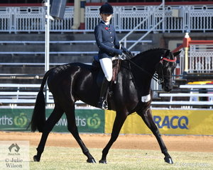 Belinda Gray's, 'OEH Showtime' was fifth in the class for Novice Hack Over 16.2hh.